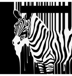 dripping zebra silhouette vector image