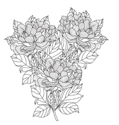 peony bouquet coloring book page vector image