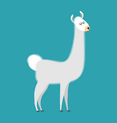 lama isolated cute alpaca animal south american vector image