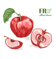 red apple isolated on white background fruit vector image vector image