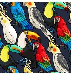 Seamless macaw and toucan vector image