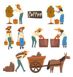 farmers gathering sorting and packaging coffee vector image