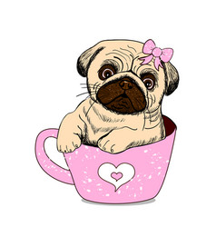 funny pug dog with pink cup pug in a mug vector image