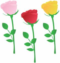multicolored roses vector image