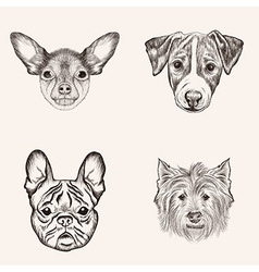 Sketch bulldog terriers hand drawn realistic faces vector