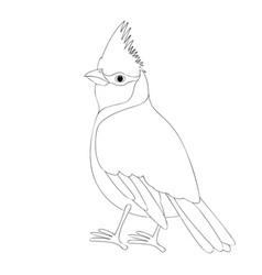cardinal bird coloring book vector image