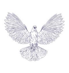 dove in flight ink sketch hand drawn vector image