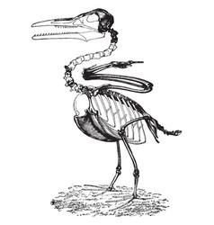 Ichthyornis vintage vector