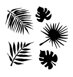 set black palm leaf silhouette isolated vector image