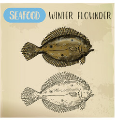 winter flounder side view sketch for sign vector image