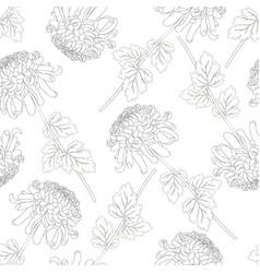 Chrysanthemum outline flower on white background vector