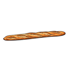 sketch fresh french bread baguette isolated vector image