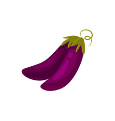Cartoon raw whole eggplant aubergine vegetables vector