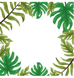 foliage nature leaves vector image