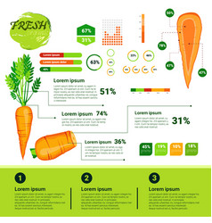 fresh organic infographics natural vagetables vector image