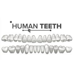 human teeth set dental health incisor vector image
