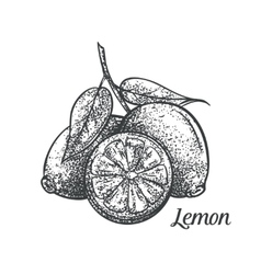 lemon monochrome vector image
