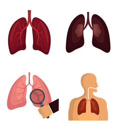 lung organ human breathing icons set vector image