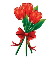 Tulip bouquet with red bow vector image