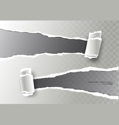 realistic ripped paper torn stripe and paper curl vector image vector image