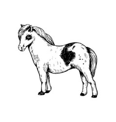 pony small horse engraving vector image
