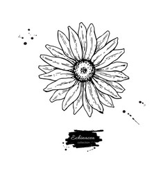 Calendula drawing isolated medical flower vector