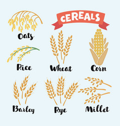 cereal grains vector image