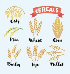 Cereal grains vector