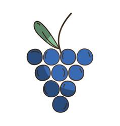 Delicious fresh grape organic fruit vector