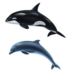 Dolphin and killer whale realistic icon set vector