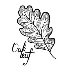 Hand drawn oak leaf with lettering isolated vector