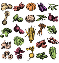 Hand drawn sketch vegetable set Eco foods vector