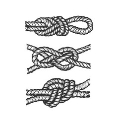 marine knots engraving vector image