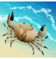 The crab vector image