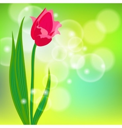 Card with red tulip on light green bokeh vector