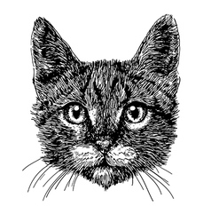 Cat 01 vector image