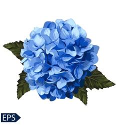 blue realistic hydrangea lavender vector image vector image