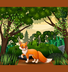 a fox looking for prey at forest scene vector image