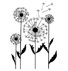 Abstract dandelion on white background vector