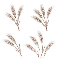 hand drawn wheat ears and sheaves vector image