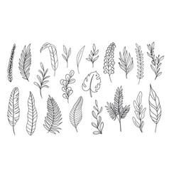 modern line art tropical leaves vector image