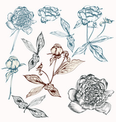 set hand drawn peony flowers for design vector image