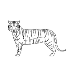 Tiger wild animal vector