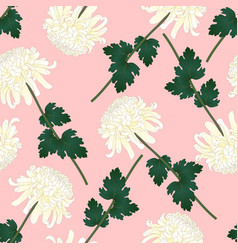 white chrysanthemum flower on pink background vector image