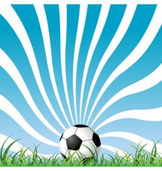 soccer ball on the grass vector image
