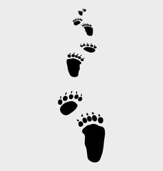 bear footsteps vector image
