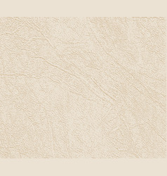beige tones in skin texture natural or faux vector image