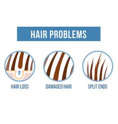 Hair care split ends vector