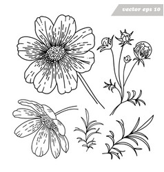 simple hand drawn cosmos flowers set vector image