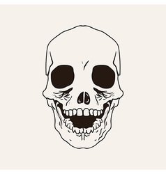 sketch bones of the head vector image
